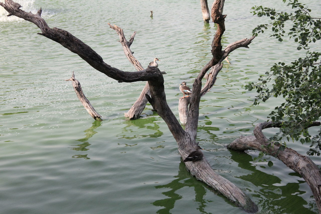 Hauzkhasvillage New Delhi India Beautiful Duck In Morning Time Setting On The Tree. Beautiful Day