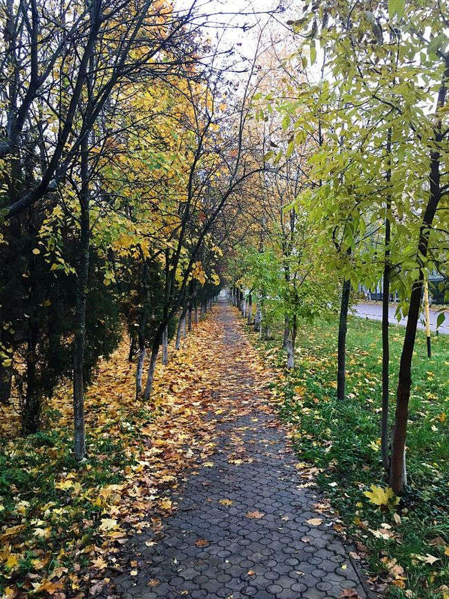 Tree The Way Forward Autumn Tree Trunk Leaf Treelined Growth Nature Day Pathway Walkway Freshness Green Russia