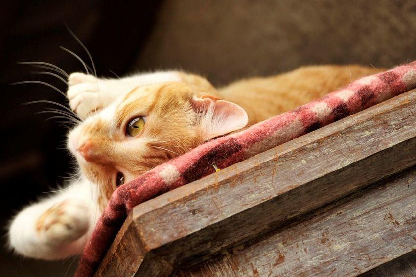 Relaxing Cat Enjoying Life Animal
