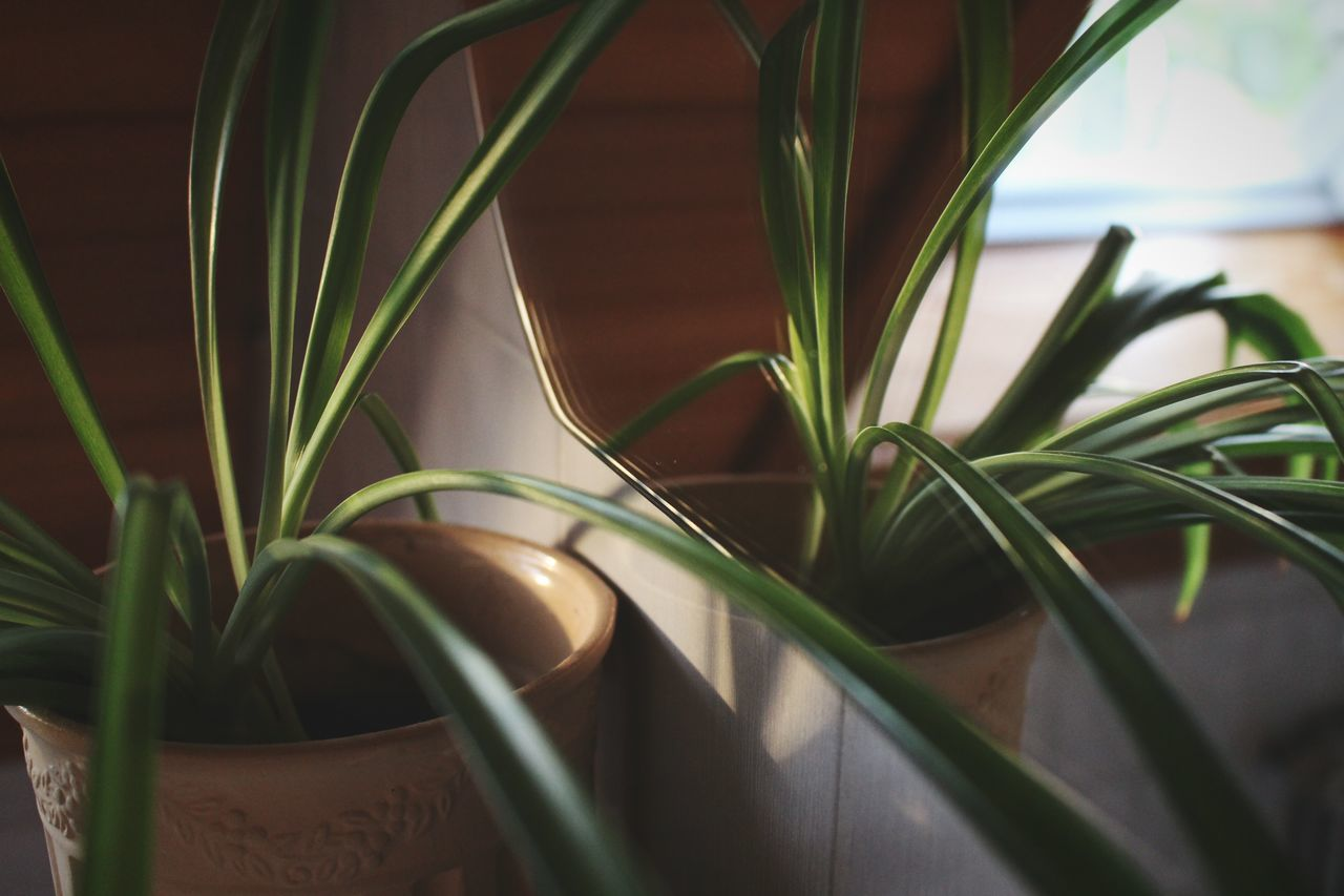 Beautiful stock photos of home, plant, growth, potted plant, close-up