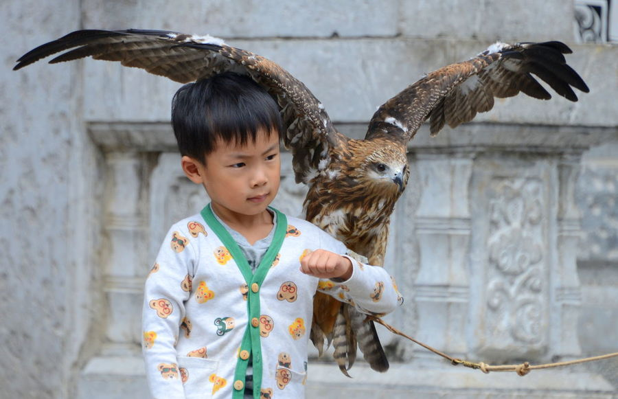 Capture The Moment a boy and his bird of prey China Birds Outstretched Boy Portrait Take Flight Seriousface Pets Hanging Out