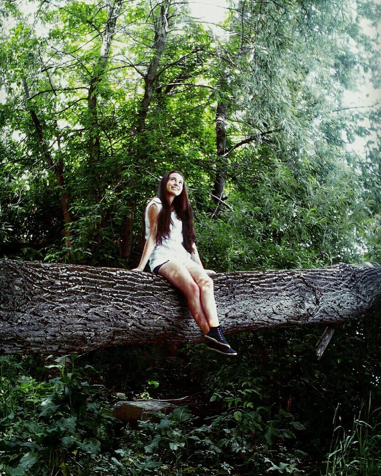 Original Experiences Alice in Wonderland. Aliceinwonderland Forest Nature