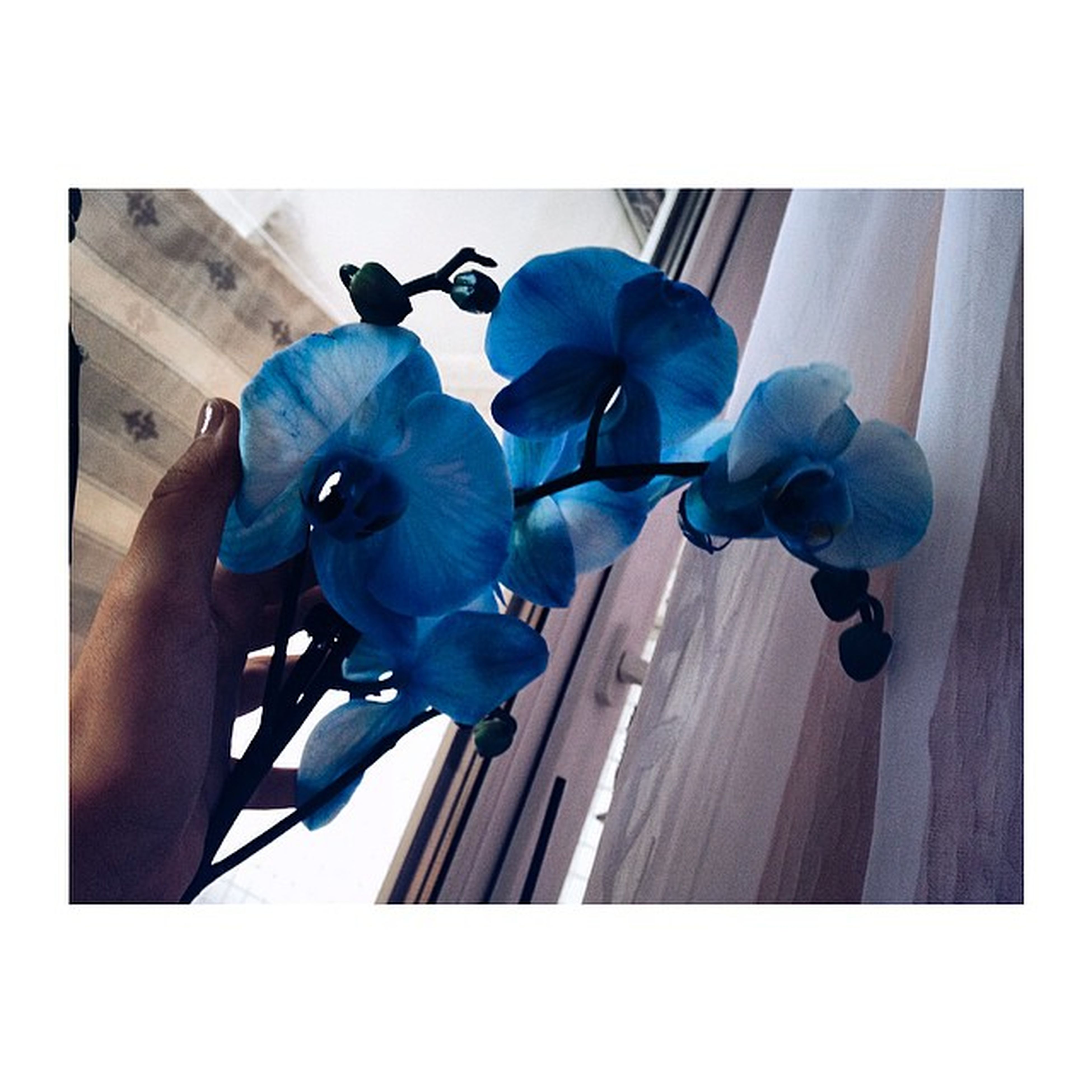 transfer print, auto post production filter, flower, blue, purple, low angle view, built structure, indoors, fragility, day, building exterior, high angle view, architecture, close-up, plant, house, sunlight, petal, hanging