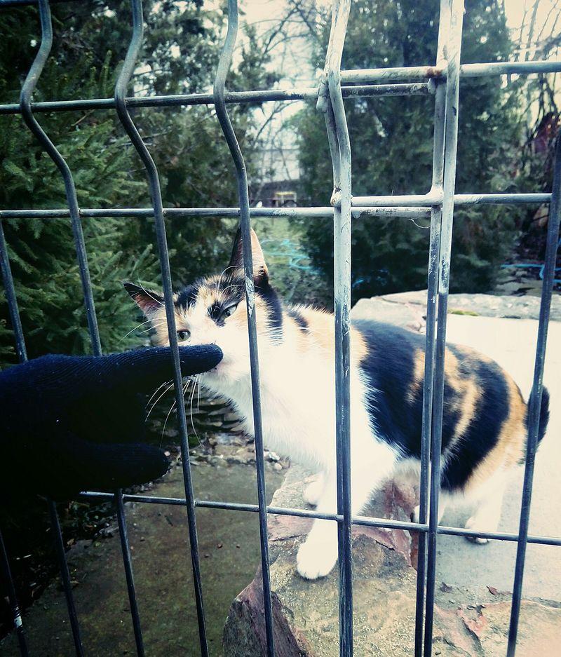Cat Catlover Mine Vatavu Bars Found On Street Friendly