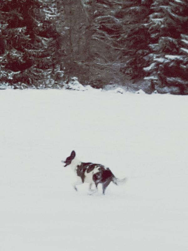 Dog Love Snow