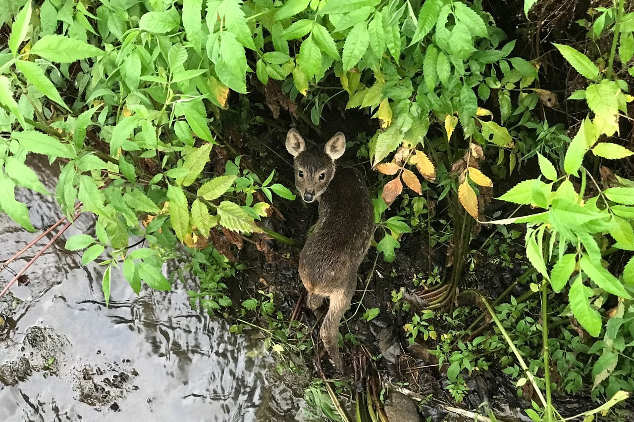 One Animal Animal Themes High Angle View Outdoors Nature Animals In The Wild Nature Photography Water Deer