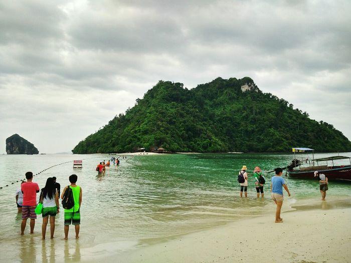 Sea Island Nature