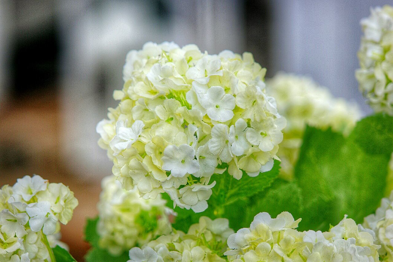 Fresh Nature Fresh And Beautiful Summer2016 Flowerlovers Flowers, Nature And Beauty Flowers_collection Flowers,Plants & Garden Flower Collection Flowers In Bloom