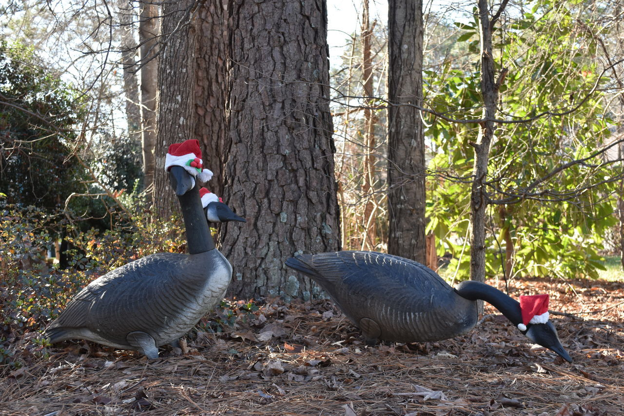 tree, bird, animals in the wild, animal themes, animal wildlife, nature, growth, day, goose, beauty in nature, forest, outdoors, no people