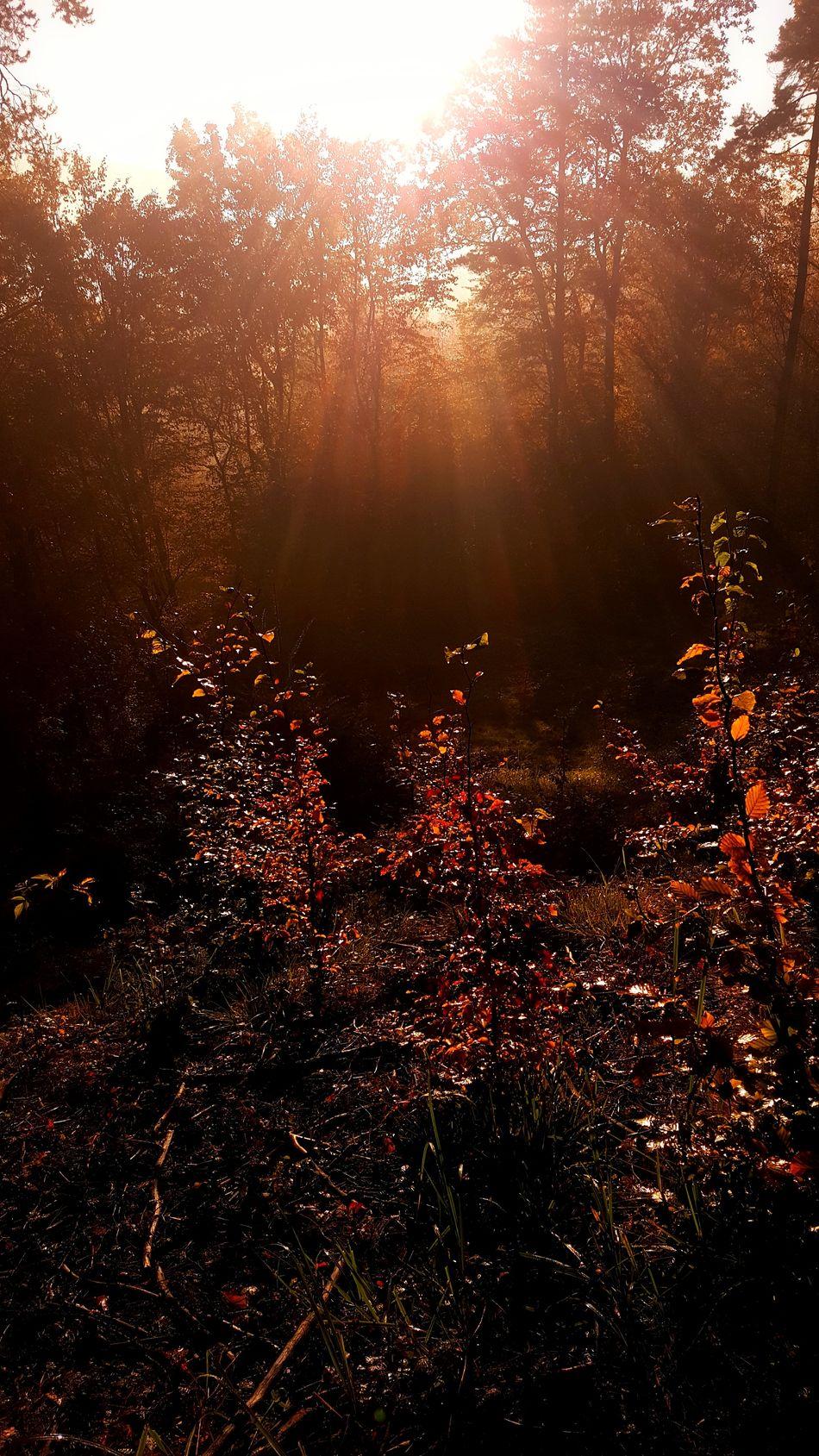 Beauty In Nature Day Forest Landscape Nature No People Outdoors Poland Scenics Sun Sunbeam Sunlight Sunrise Tree Tree Area