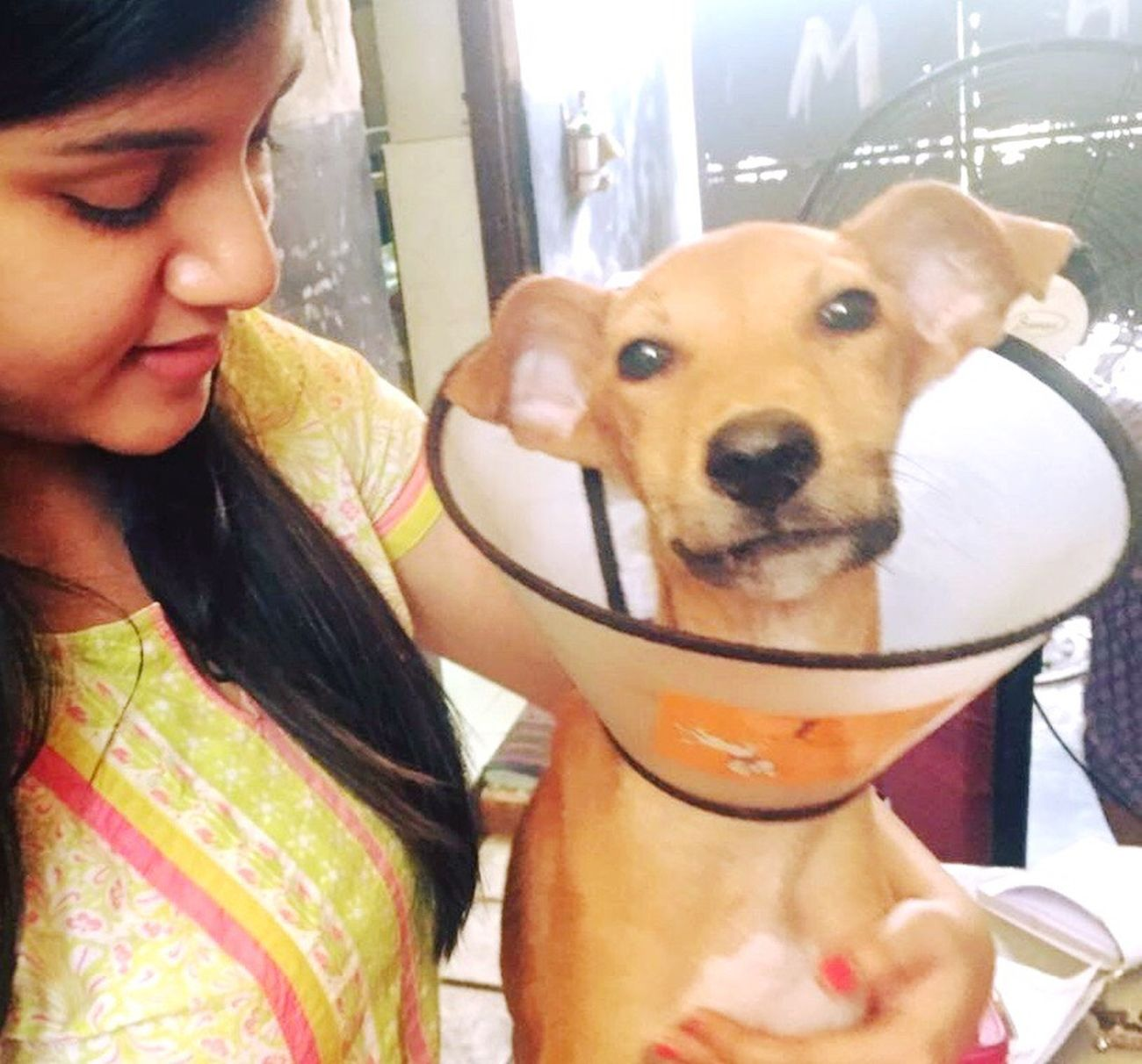 Halo underwent surgical fixation of his broken jaw with metal implants. After hours of painful surgery, he woke up and Smiled Rescue Pup DogLove