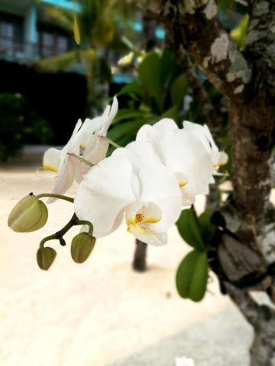 Flower 蓝梦岛 EyeEm 巴厘岛 Bali, Indonesia