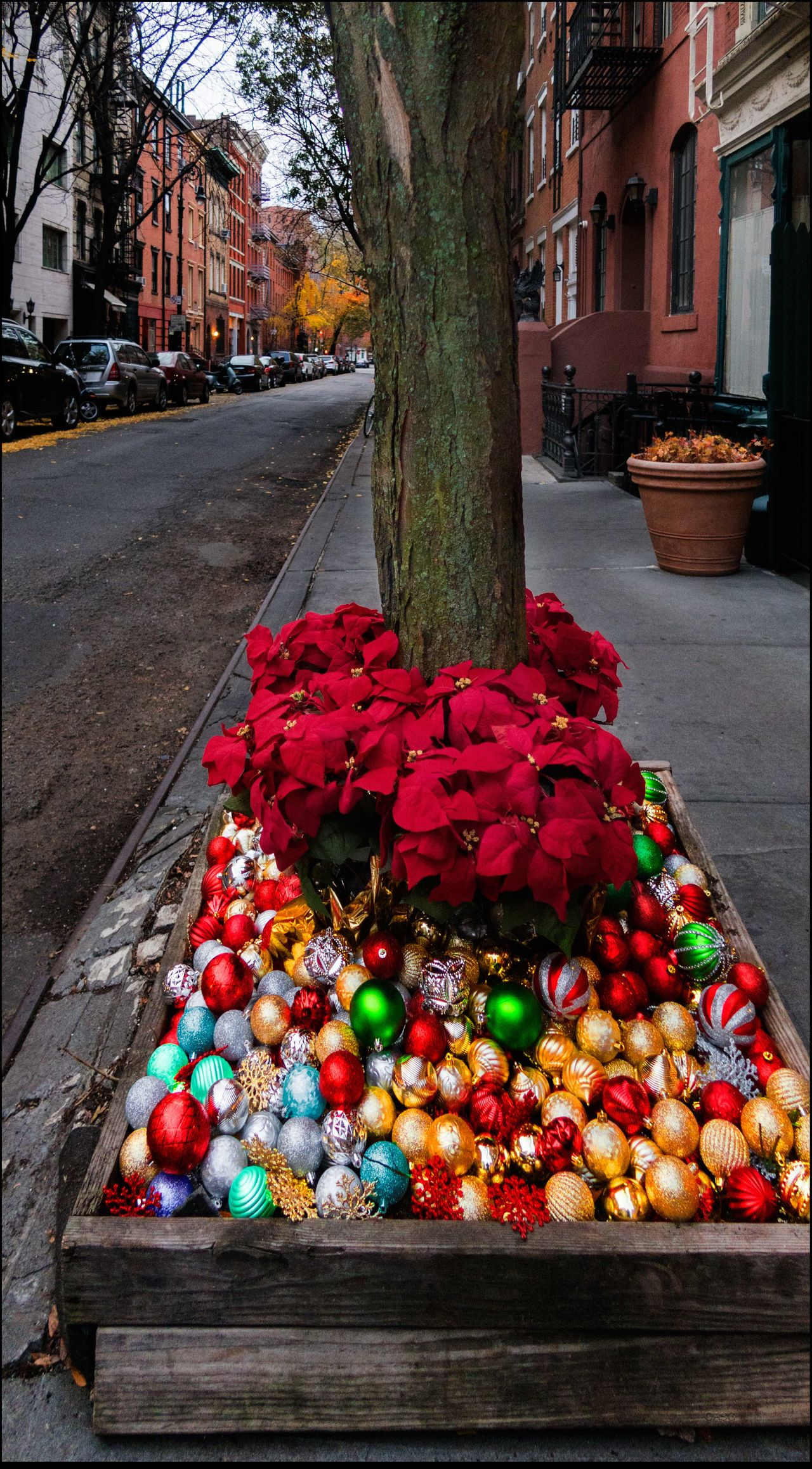 """""""Curb your Dog"""" 🔫🔫😜 Curb Your Dog!!🔫🔫 11/29/15 Perry St.,NYC Poinsettia Plants Xmas Balls Xmas Decorations In Front Of Sant Ambroeus Rest."""