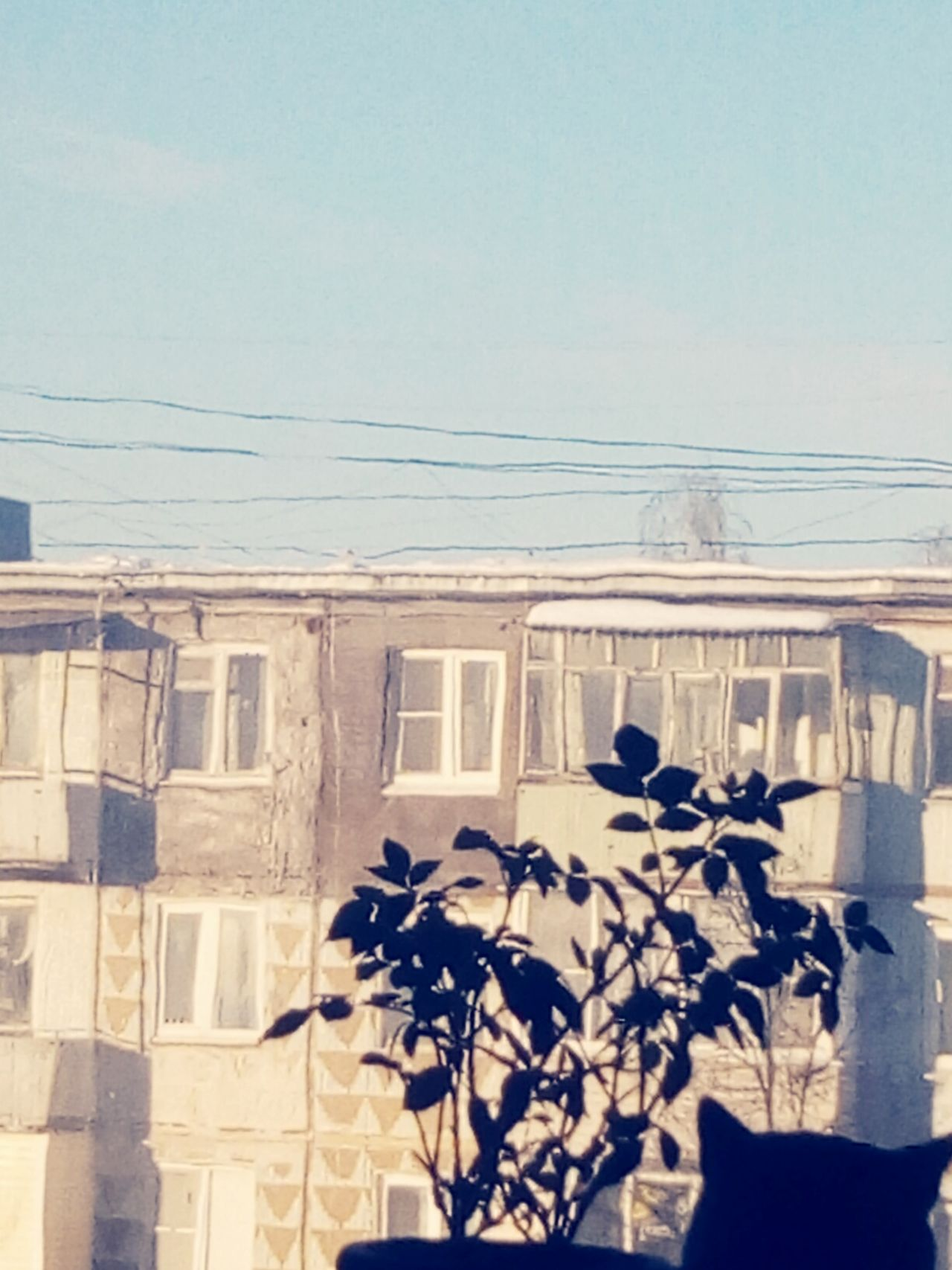 Clear Sky Sunlight Window Architecture No People Sky Building Exterior Day Outdoors EyeEm Black And White Photography Cats Of EyeEm Silhouette Indoors  Cat Ivy Eye4photography  Nature Residential Building City Built Structure Eye4photography