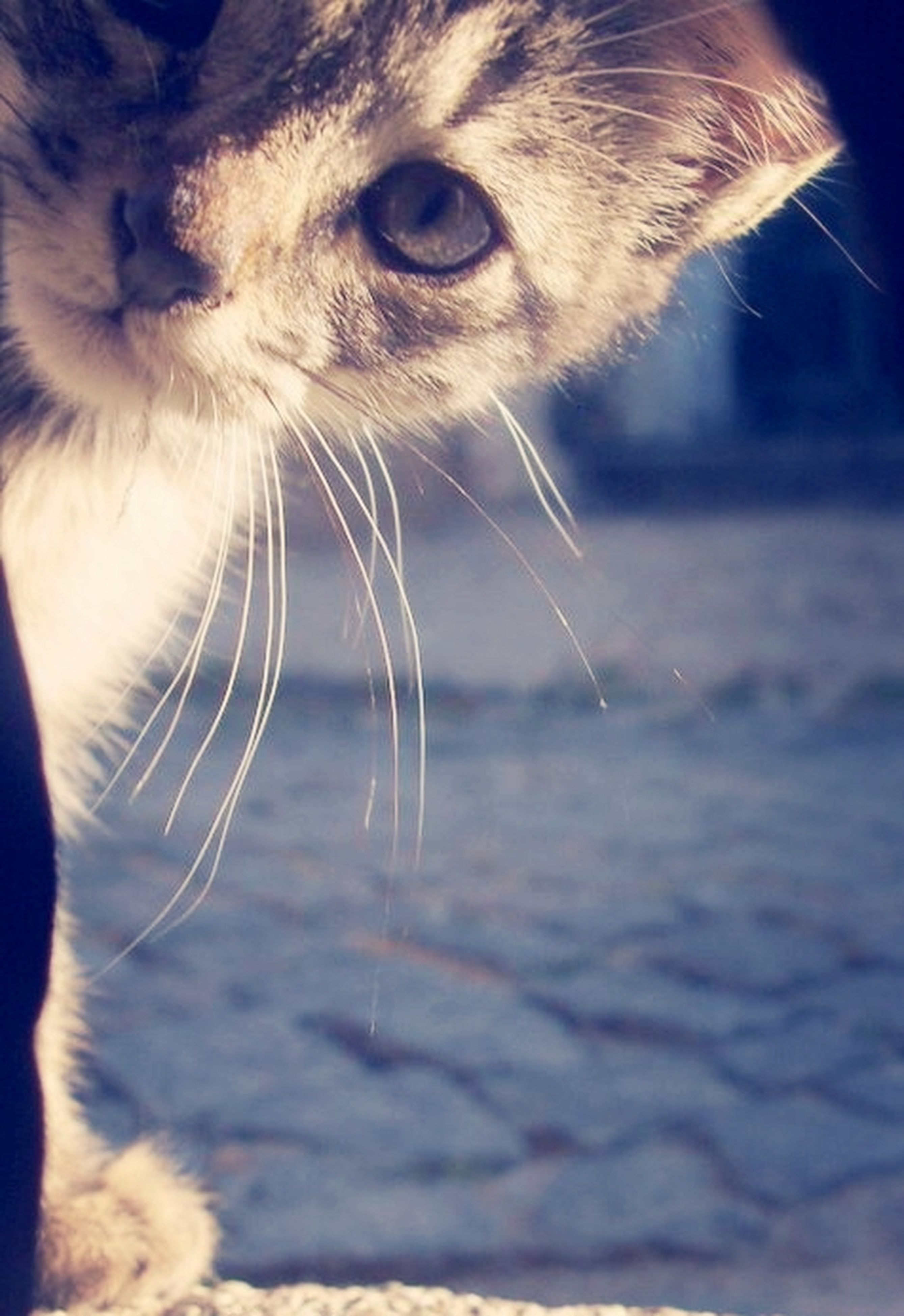one animal, animal themes, mammal, pets, domestic animals, animal head, close-up, animal body part, animal eye, focus on foreground, wildlife, domestic cat, selective focus, whisker, zoology, part of, nature, cat, no people, animal hair