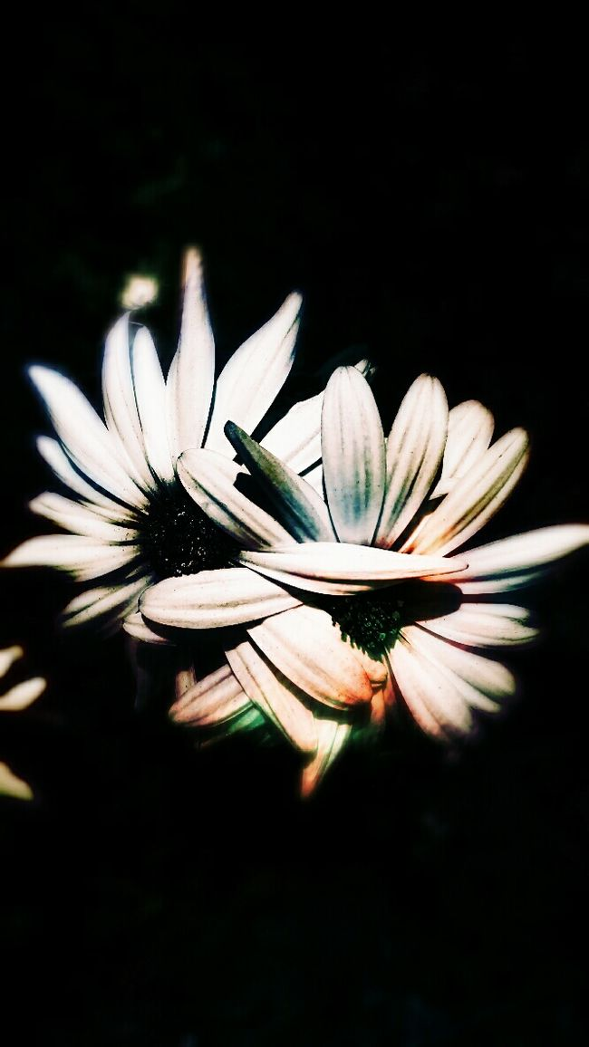 Abstract Ethereal Beauty Darkart Canvas Nature's Placement Nature Photography