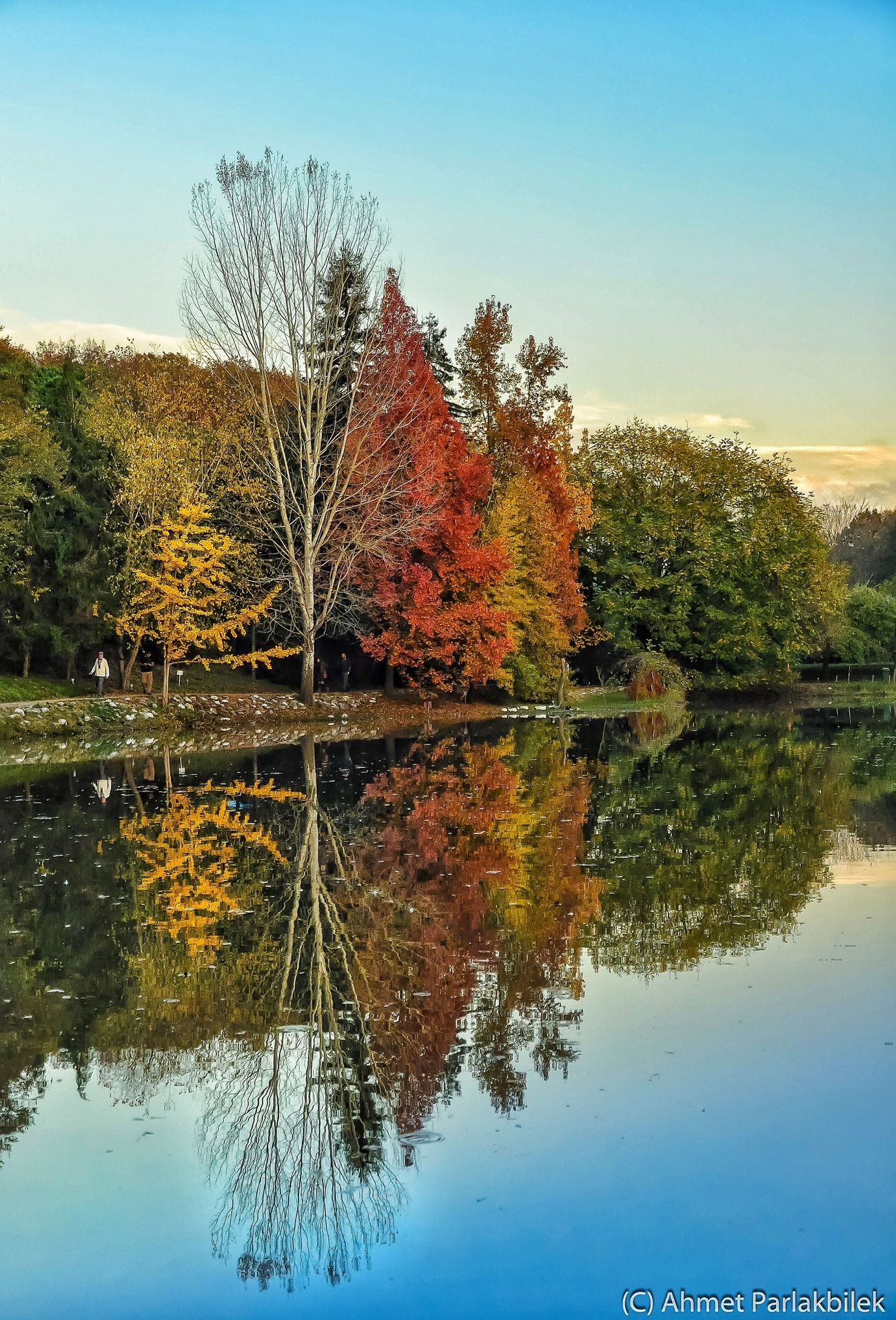 Autumn Reflection Water Tree Lake Waterfront Tranquility Tranquil Scene Scenics Calm Clear Sky Change Blue Beauty In Nature Standing Water Growth Symmetry Majestic Nature Day Non-urban Scene Trees EyeEm Nature Lover