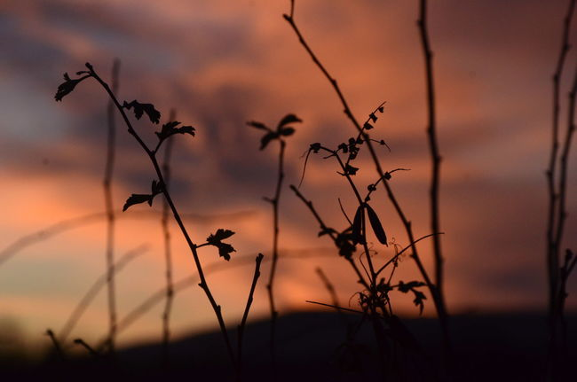 Nature Golden Hour Sky And Clouds Winter Nikonphotography Nikon D7000