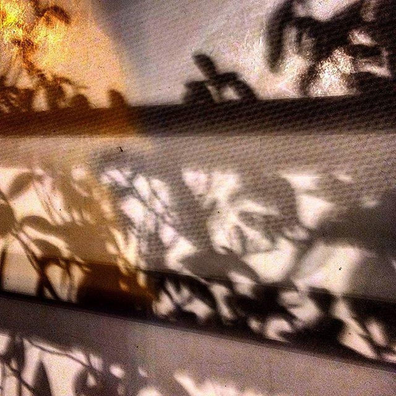 My LIFE is like a SHADOW belonging to the UNKNOWN but has many SECRETS HIDDEN deep within Shadow ShadowPhotoing MyShadowArt Trees_Shadowed ShadowMYstery Soi Streetsofindia Photography Photographer LateNightSnap D3300 Nikon Nikkor Nikonlove NikkorHeart Captivity MyCaputrvity Mydiaries LateNightDairies Igers_wanderlust MyWanderLust