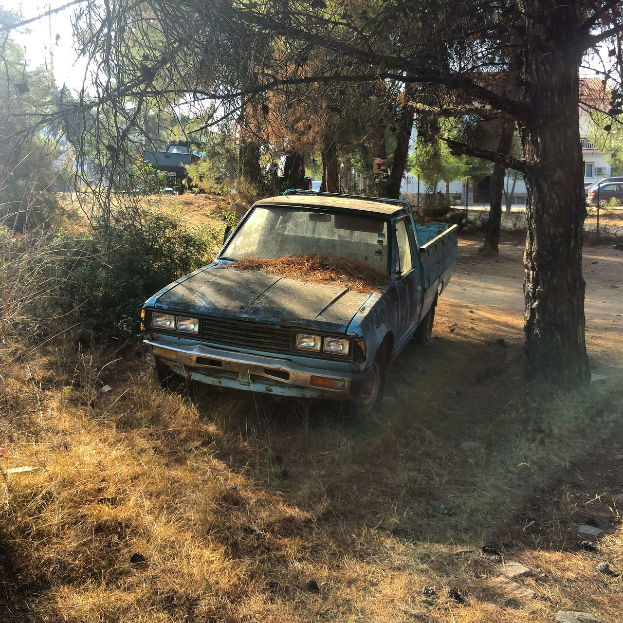 tree, transportation, car, day, abandoned, no people, growth, nature, outdoors
