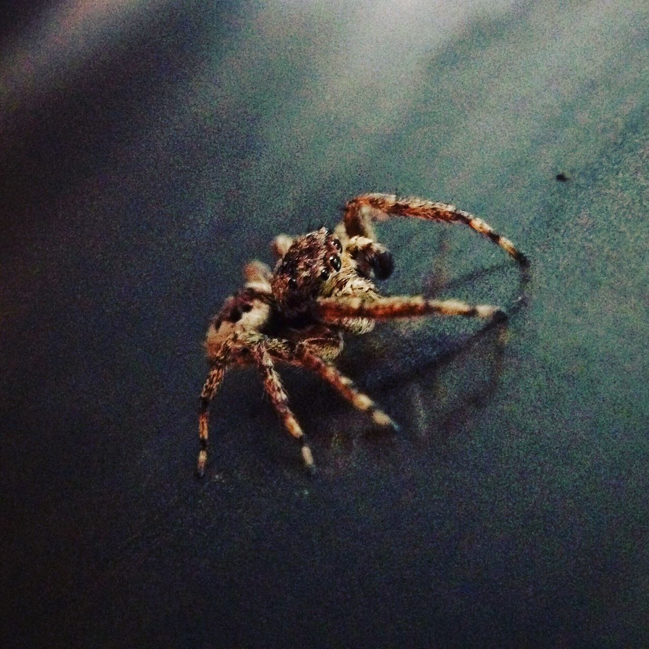 one animal, animal themes, animals in the wild, spider, no people, close-up, indoors, animal wildlife, day