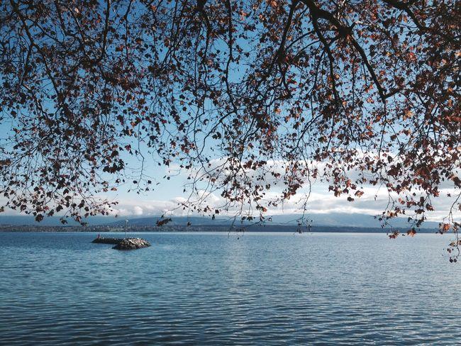 Autumn Autumn Colors Lake View Lake Lakeside Autumn Leaves Tree Tree Branches Nature Horizon Horizon Over Water Panorama Water Leaves Are Falling Beautiful Nature Season  Fall Fall Beauty Fall Colors Autumn Sun