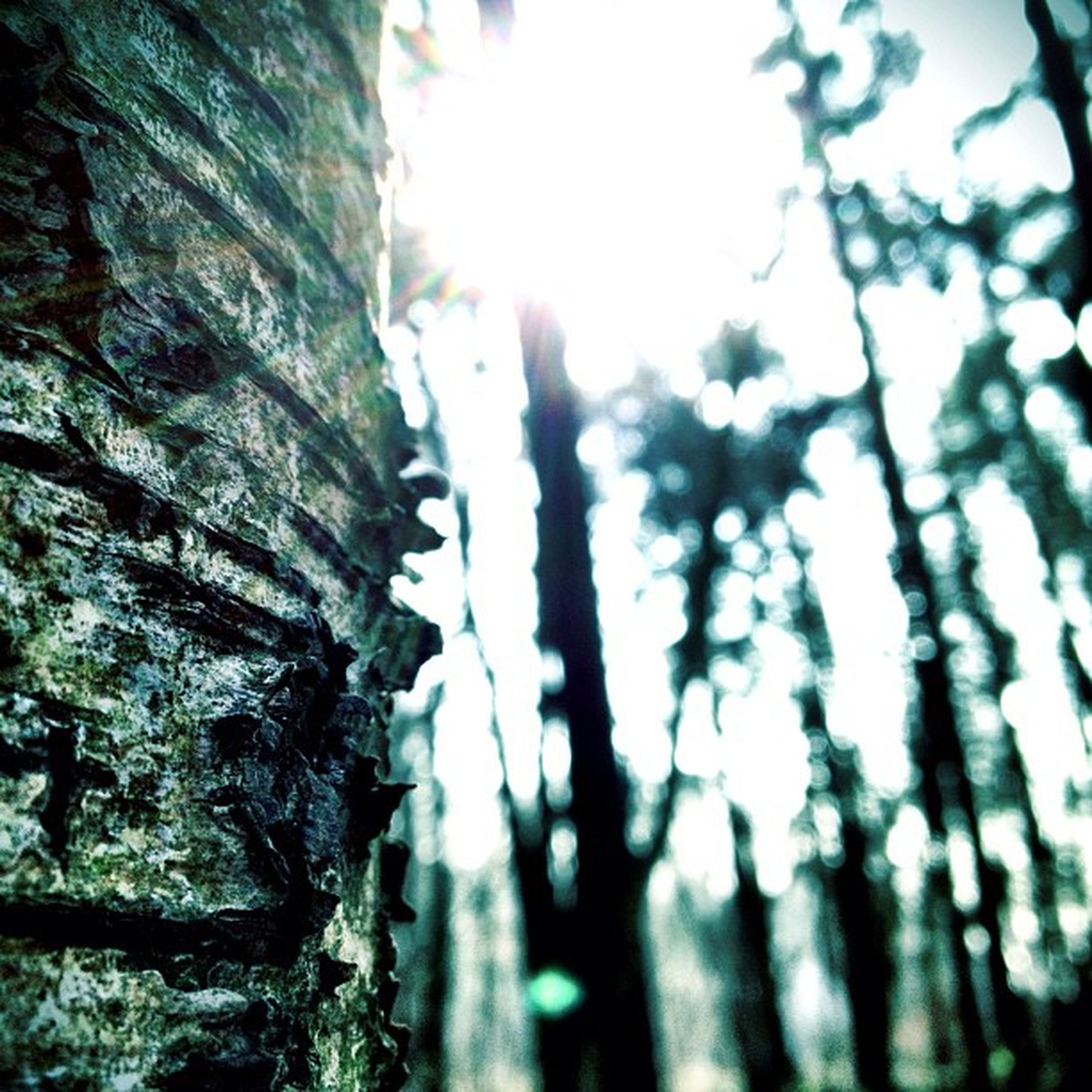 tree, focus on foreground, tree trunk, growth, close-up, selective focus, nature, textured, low angle view, tranquility, day, outdoors, branch, no people, beauty in nature, forest, sunlight, rough, clear sky, leaf