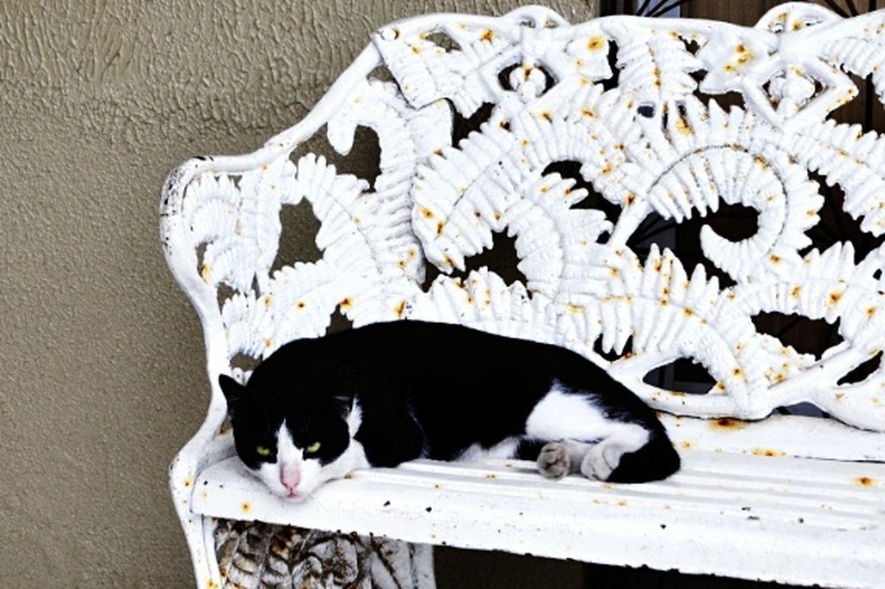 EyeEmNewHere EyeEm Gallery Kittens Gatos Feline Day EyeEmBestPics Sãocristóvão Whitebank Gato Gatos 😍 Felino Bancobranco Pensandonavida Olhosverdes EyeEmCatlovers Eyeemcat Gatosland EyeemTeam