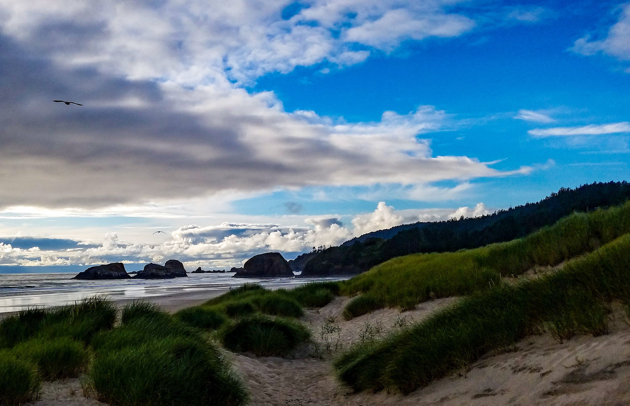 Ocean View at Cannon Beach, Oregon Water Beach Outdoors Scenics Nature Vacations No People Beauty In Nature Mountain Day Relaxing Senic Travel Destinations Lowtide  Rocks Ocean Saltwater Travel Oregon Cannon Beach Wave Sky Sand Summer Oregonbeach EyeEmNewHere Miles Away