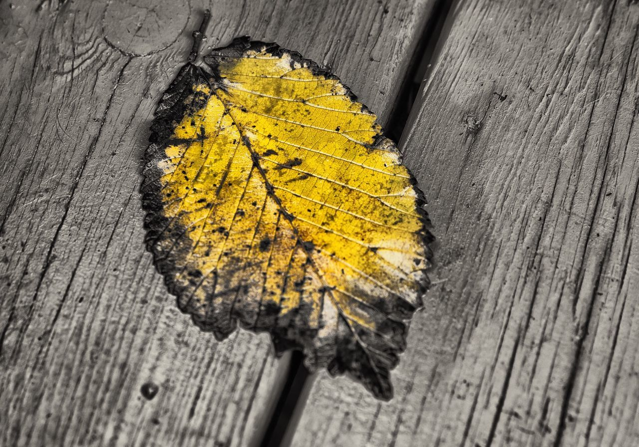 Dry Autumn Leaf On Wooden Planks
