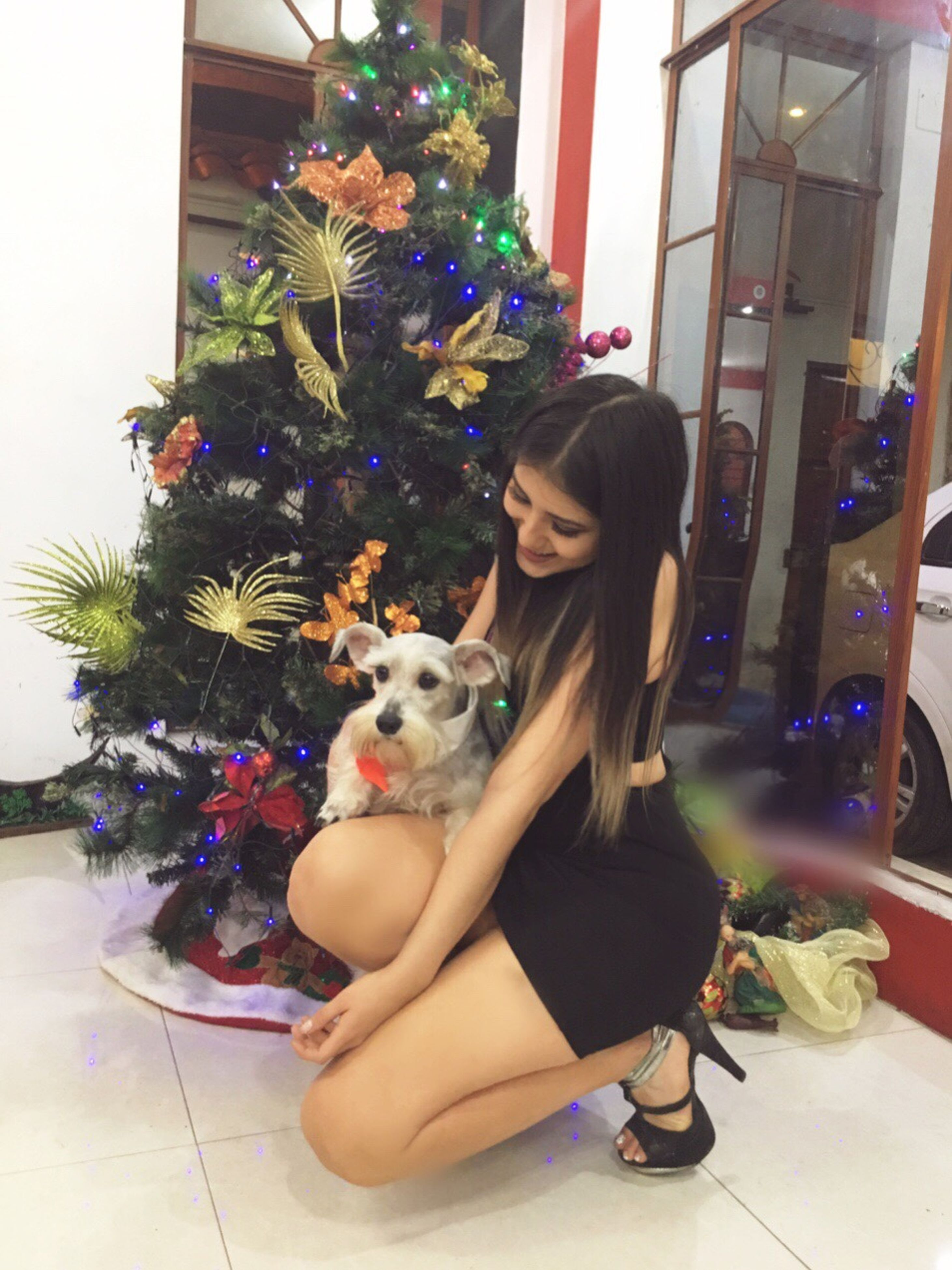 pets, dog, one animal, full length, christmas tree, sitting, christmas, animal, animal themes, tree, domestic animals, indoors, friendship, home interior, puppy, pet owner, one person, people, mammal, pomeranian, day