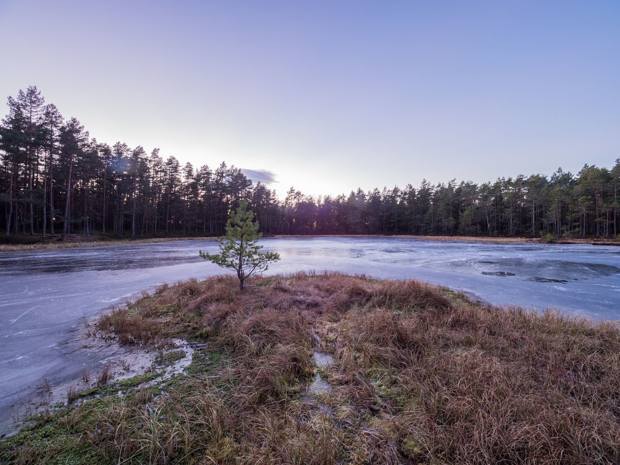 The frosen lake Måsatjernet at Nesodden, Norway Forest Forrest Lake Frosen Lake Frost Frosty Days Frozen Lake View Lakeshore Nature Nature No People Norway Outdoors Scandinavia Small Tree Small Tree On The Beach Tree Wood