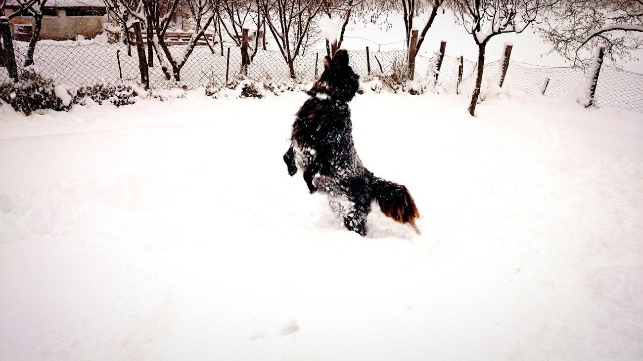 Dolphin dog on a snowy day Winter Wonderland First Eyeem Photo