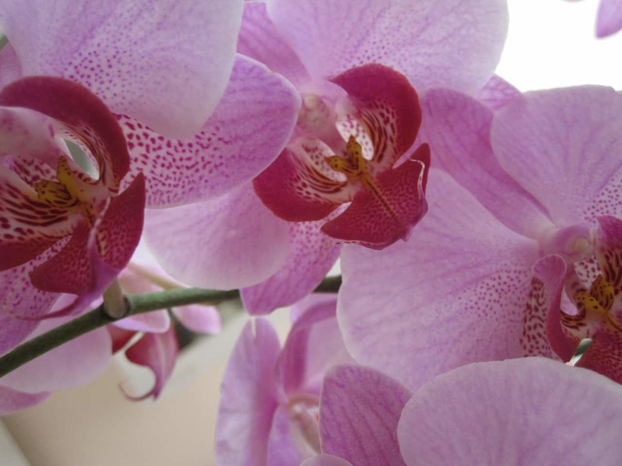 Flower Fragility Nature Beauty In Nature Orchid No People Petal Freshness Plant Close-up Flower Head Beauty Pink Color Outdoors Day Nofilter Beauty In Nature Orchids