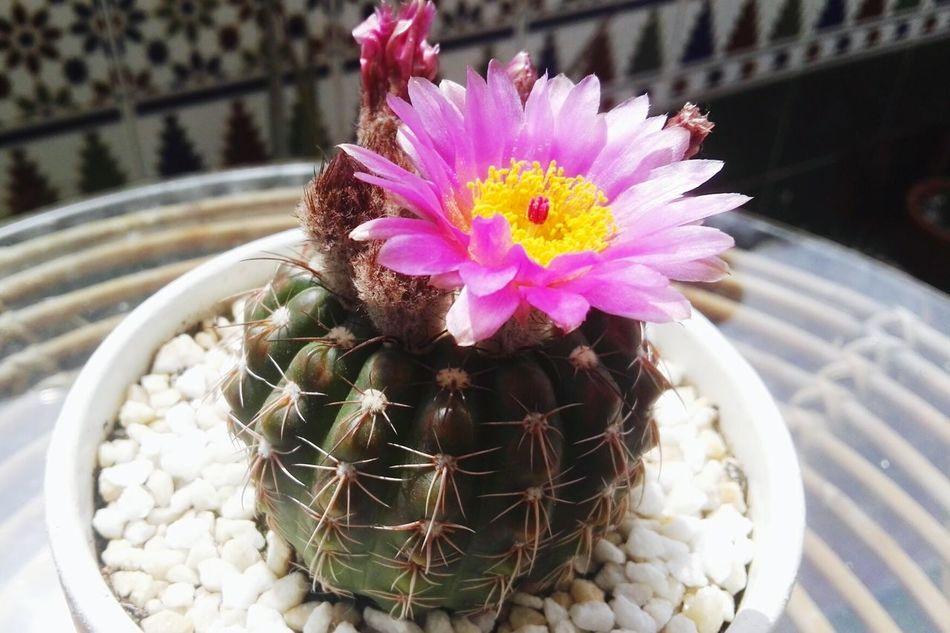 Flowers,Plants & Garden Flores Flores Y Más Flores Cactus Cactus Flower Cactus Garden Cactuslover Cactus Collection Cactuscollection Cactus!:**