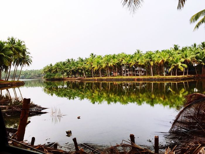Coastal life India Water Kerala Coconut Groove Cool Day Opposite View Near The Sea Reflection_collection Reflection Nature Nature Photography Nature On Your Doorstep Natural Beauty Cool Pleasant Backwaters Best View Holidays ☀ Tranquility Landscape Freelance Life Outdoors Perspectives On Nature