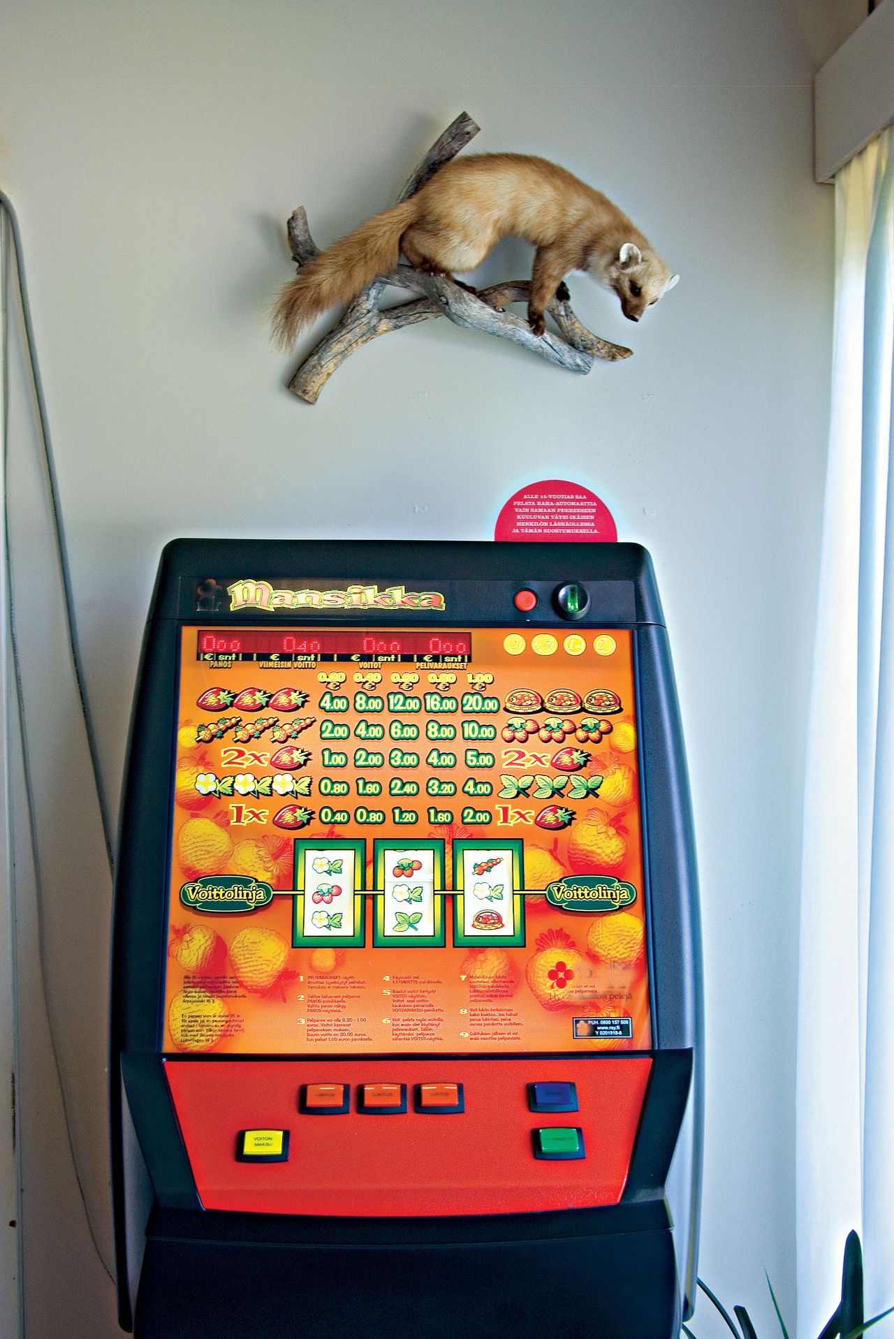 A Caming Console A Pine Marten A Pine Marten And A Play Machine A Play Machine A Stroke Of Luck? Animal Themes Day Indoors  No People One Animal To Pass The Time