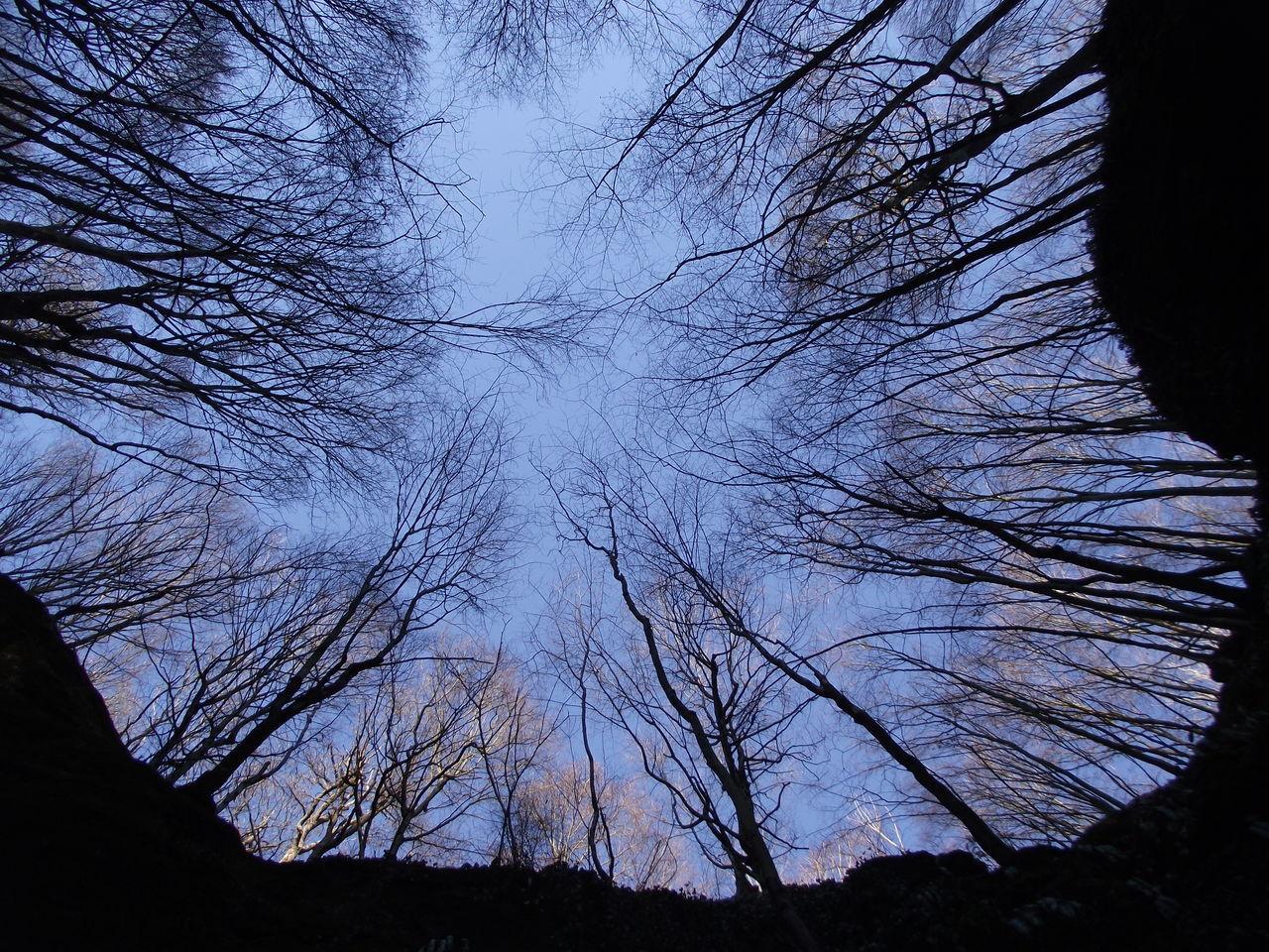 Bare Tree Beauty In Nature Branch Bükk Hungary Nature No People Sky Tranquility Tree