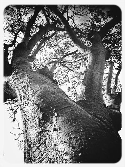 Perspectives Nature_collection NEM Black&white EyeEm Nature Lover