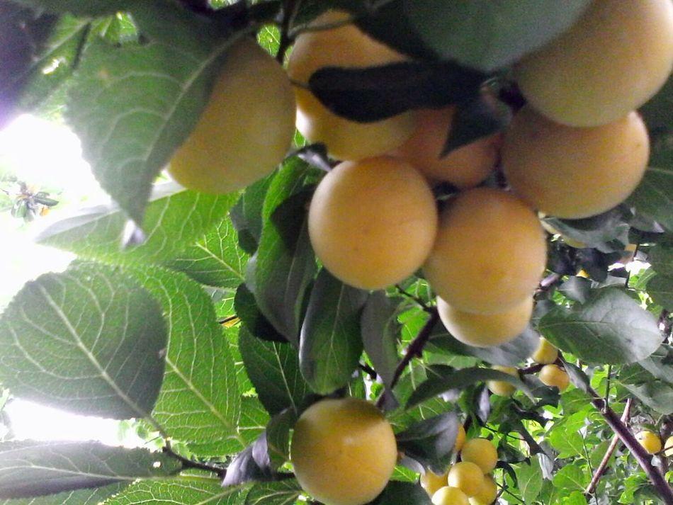 @wolfzuachis Slowfood Eyeem Market Creative Light And Shadow Corcoduse Natural Healthy Food Fruits Fruit