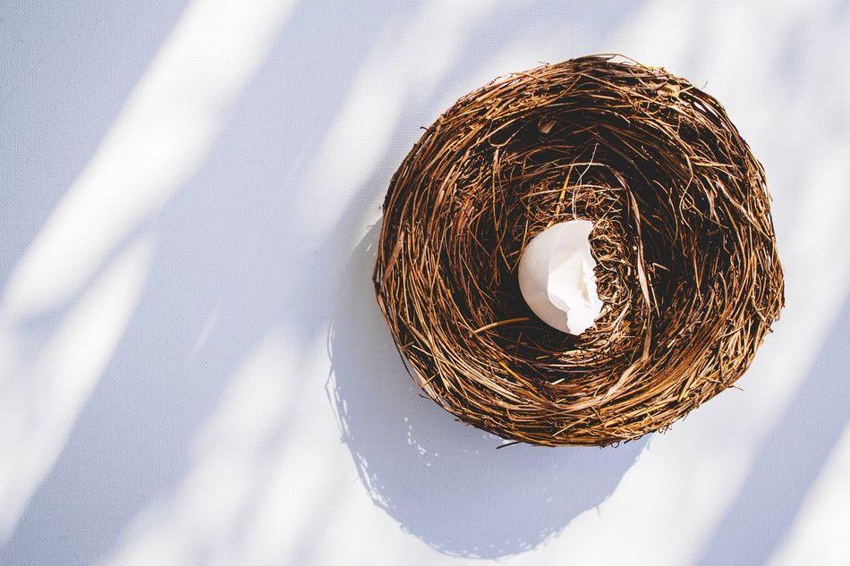 Beautiful stock photos of easter, Animal Egg, Animal Nest, Animal Shell, Animal Themes