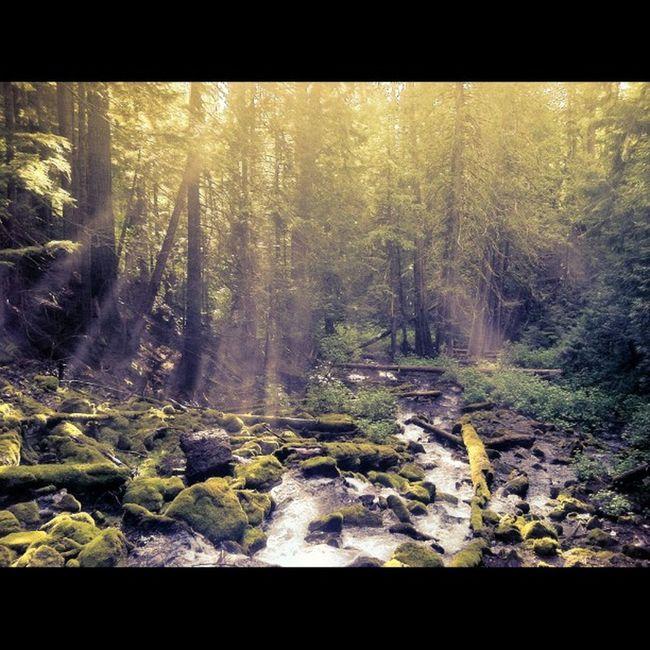 Canon_photos Natgeotravel Greettheoutdoors Naturephotography PNWonderland Discover_pnw Oregonexplored Westcoast_exposures @yourbesttravelphotos @thephotosociety Myawaycontest