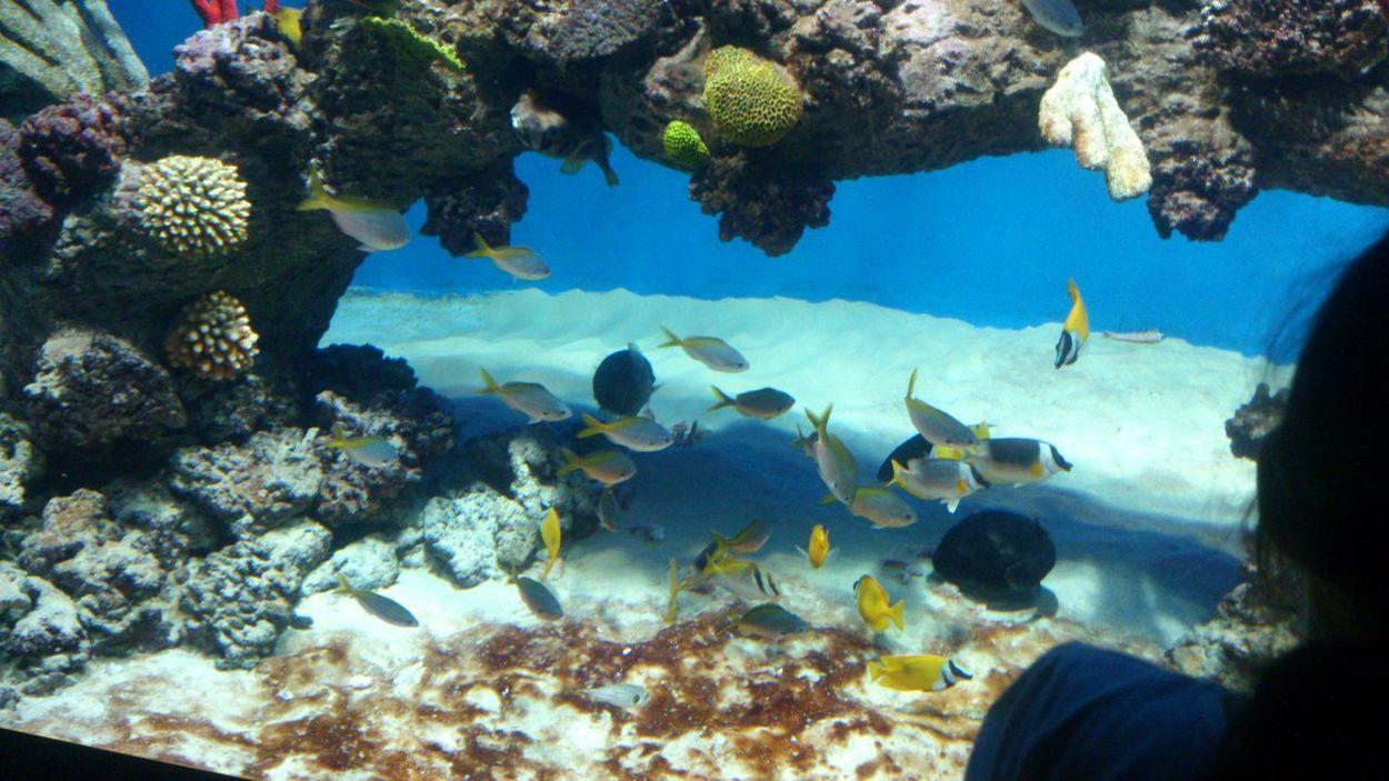 аквариум рыбки Poisson Beautiful Nature красота подводный мир