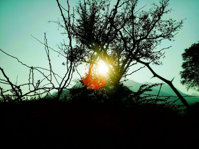 Tree Sky Nature No People Sunlight Growth Beauty In Nature Tranquility Outdoors Low Angle View Sun Silhouette Sunset Branch Plant Scenics Day Dayvsnight Blue Blue Hour Beforenight Aftersunset Freshness Close-up Low Angle View The Great Outdoors - 2017 EyeEm Awards