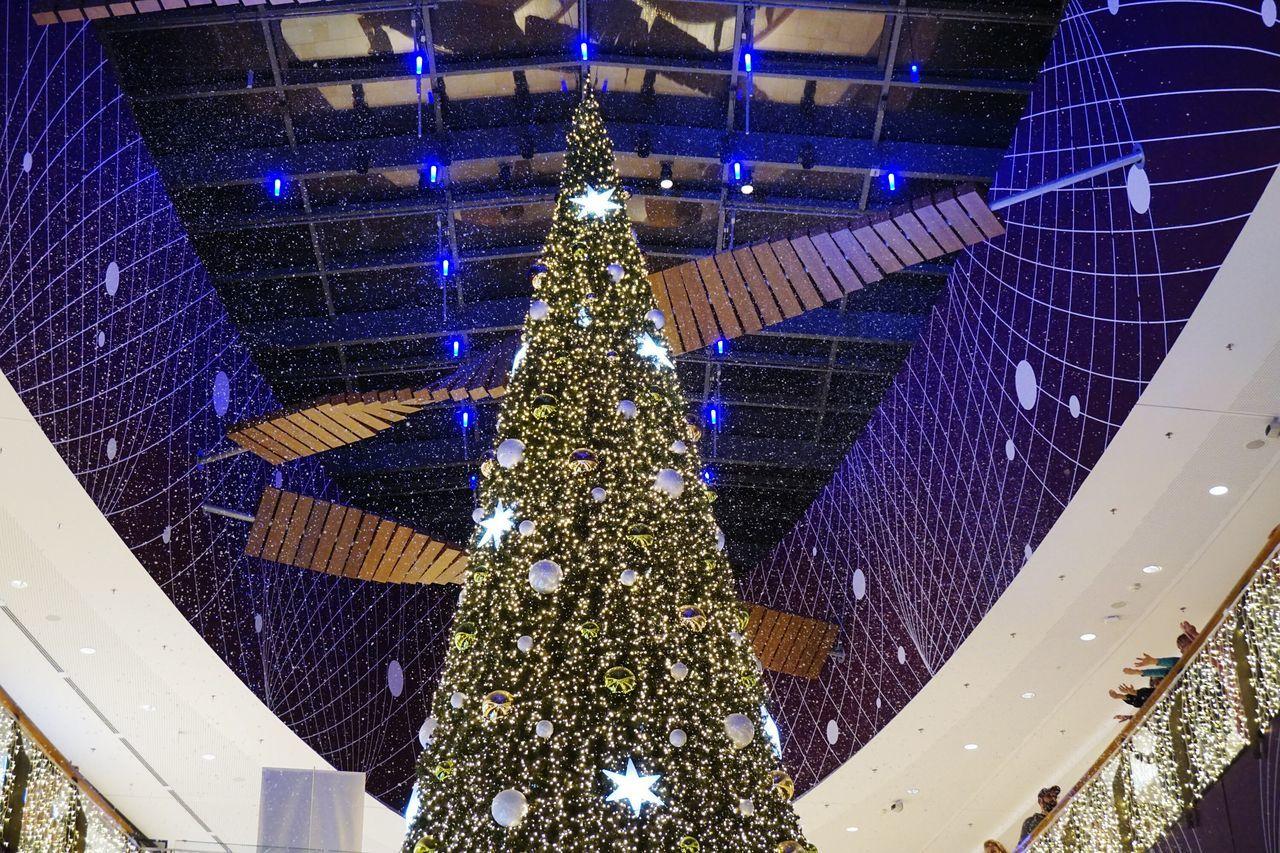 Snow ❄ Chrismas Tree Chrismastime Chrismas Lights