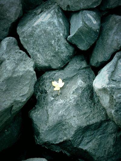 Fall On The Rocks Fall Beauty Enjoy The Little Things Vive Solo https://youtu.be/mWwZ7S4nzmo