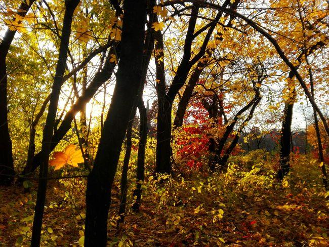 Autumn Autumn Colors Autumn Leaves Autumn🍁🍁🍁 Autumn Collection Autumn 2015 Autumnbeauty Autumnlea