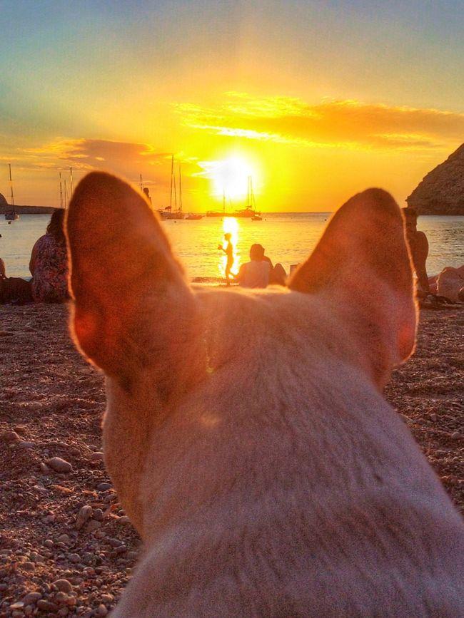 Puesta De Sol Ibiza Magic Sunset Mydog Chloe