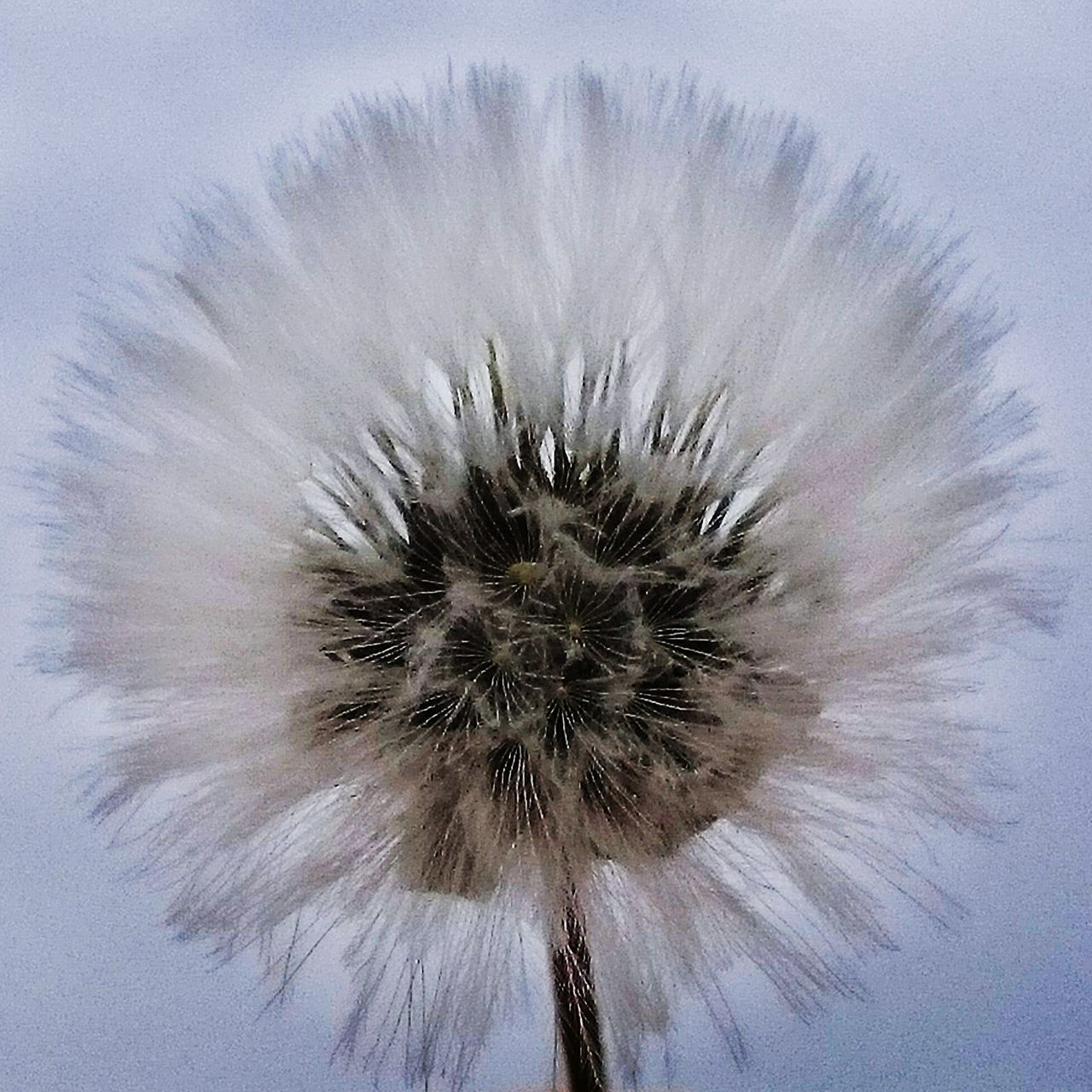 Close-Up Of Dandelion Blooming Against Sky