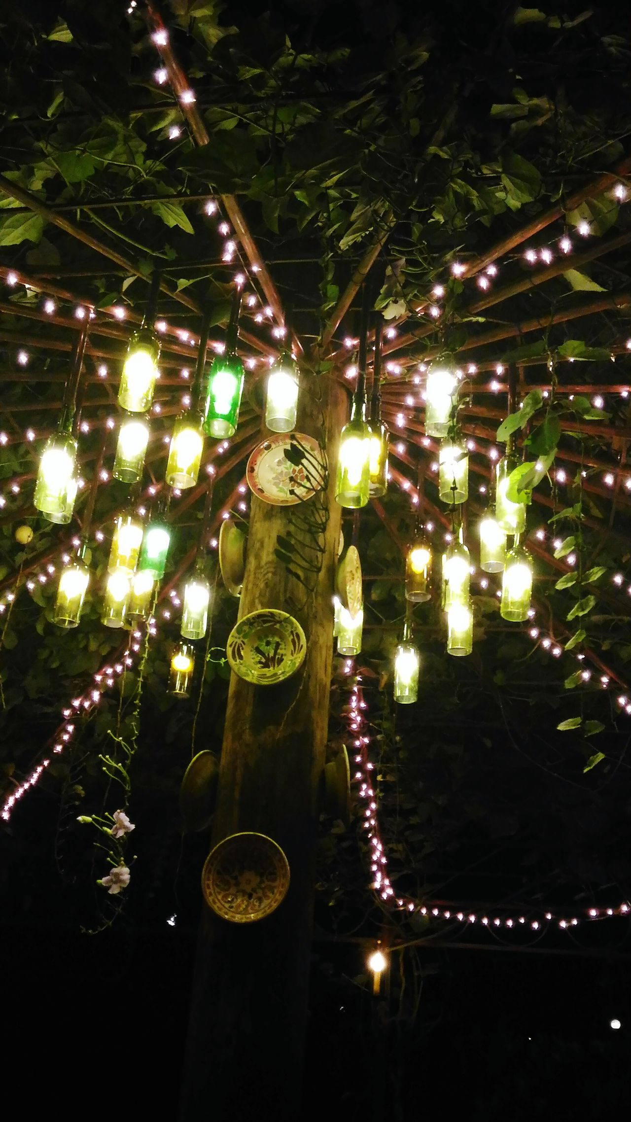 Lights Bottles Showcase June Bottle Lamps Hanging Bottle Lamps Tree With Lights Garden Tagaytay, Philippines